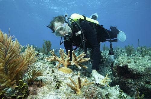 la plongée à la Réunion